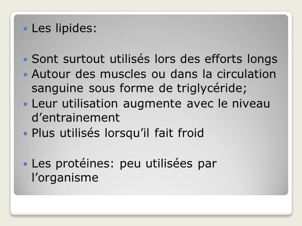 Les lipides: Sont surtout utilisés lors des efforts longs. Autour des muscles ou dans la circulation sanguine sous forme de triglycéride;
