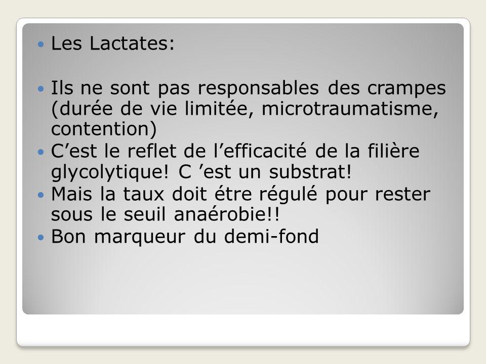 Les Lactates: Ils ne sont pas responsables des crampes (durée de vie limitée, microtraumatisme, contention)