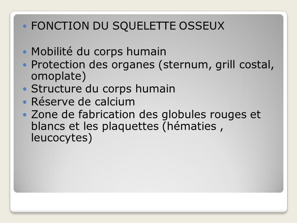 FONCTION DU SQUELETTE OSSEUX
