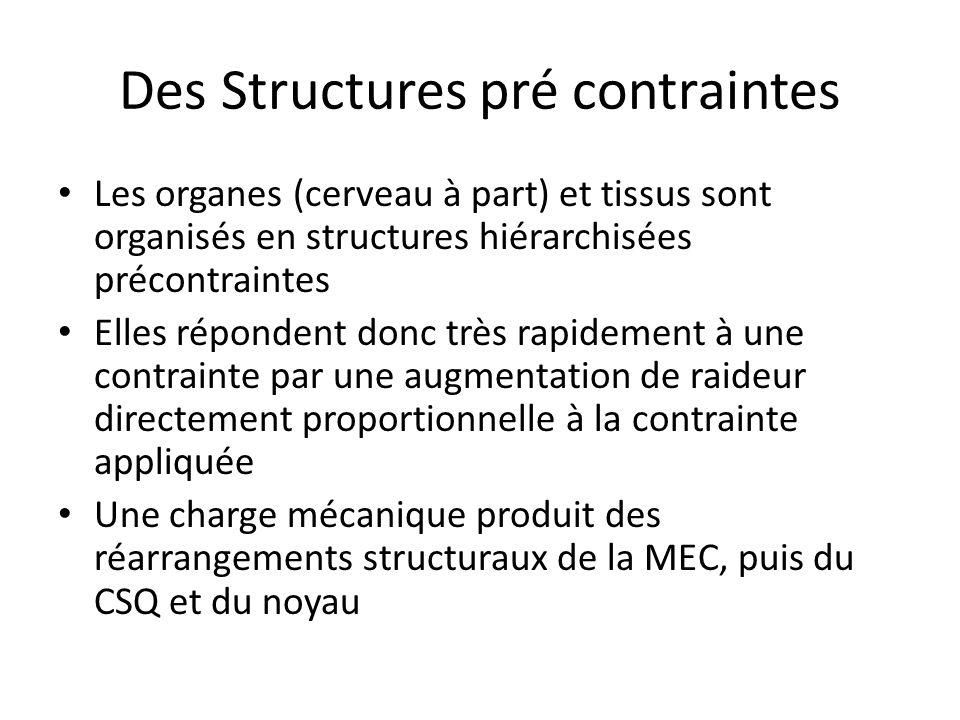 Des Structures pré contraintes