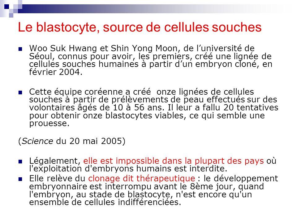 Le blastocyte, source de cellules souches