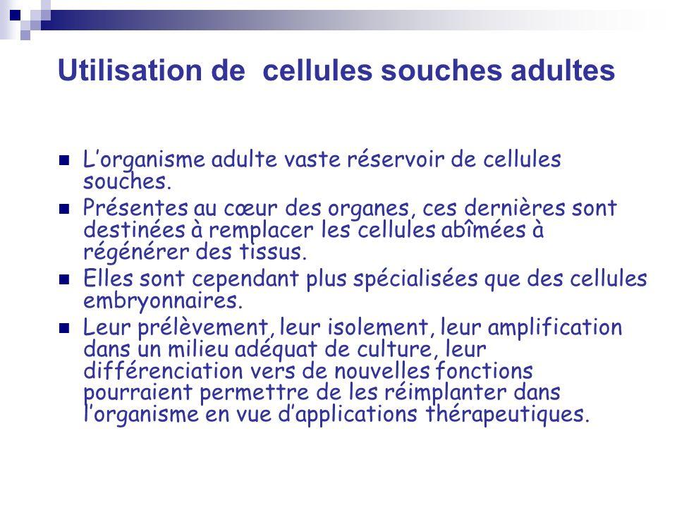 Utilisation de cellules souches adultes