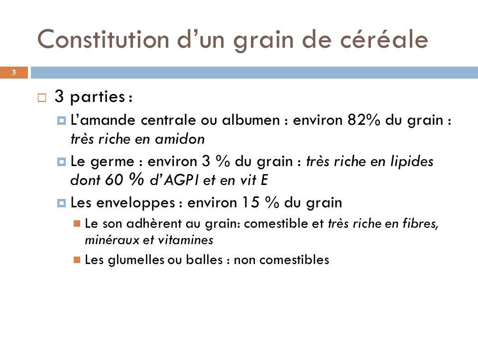 Constitution d'un grain de céréale