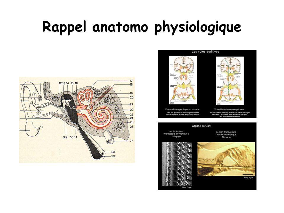 Rappel anatomo physiologique