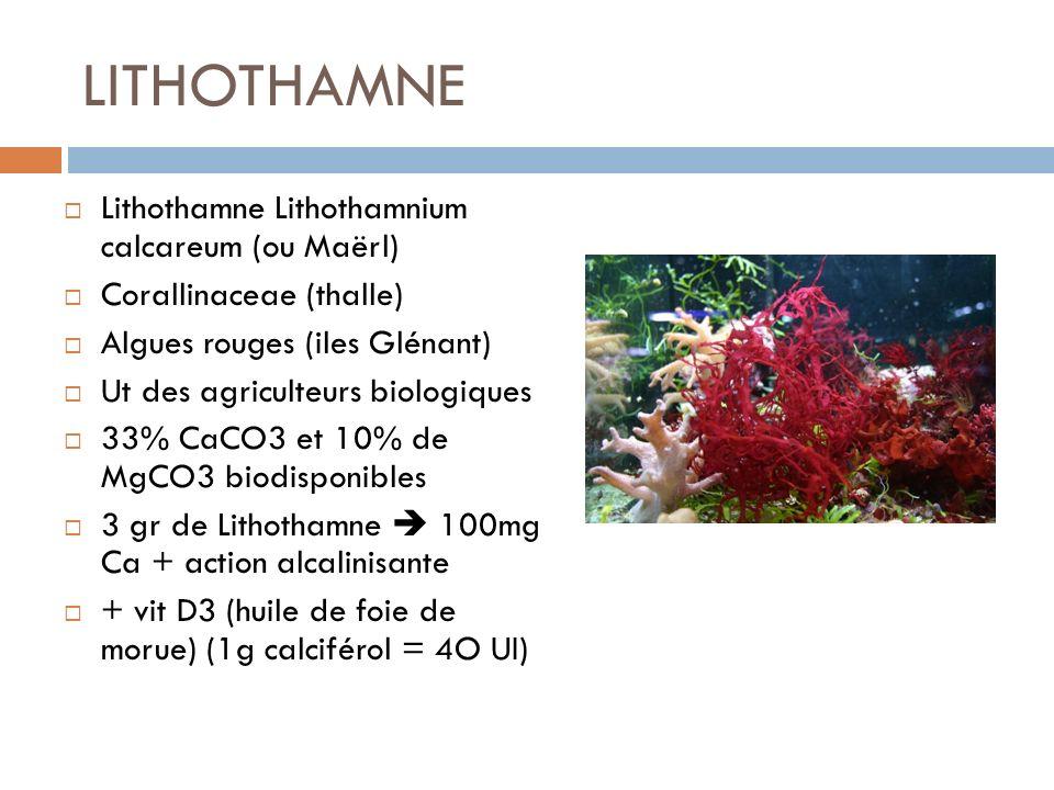 LITHOTHAMNE Lithothamne Lithothamnium calcareum (ou Maërl)
