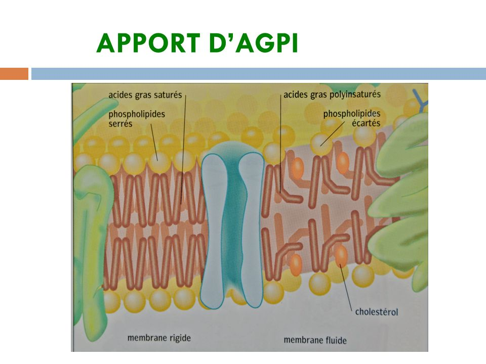 APPORT D'AGPI