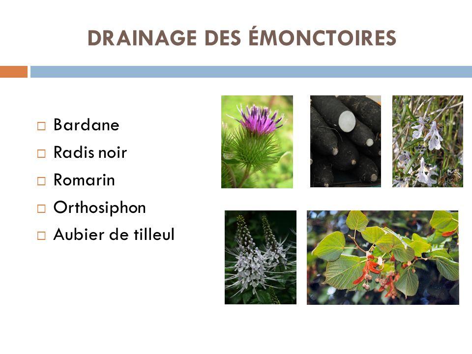 DRAINAGE DES ÉMONCTOIRES