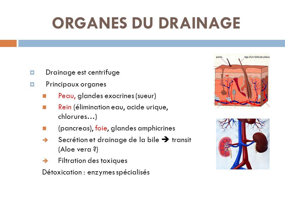 ORGANES DU DRAINAGE Drainage est centrifuge Principaux organes