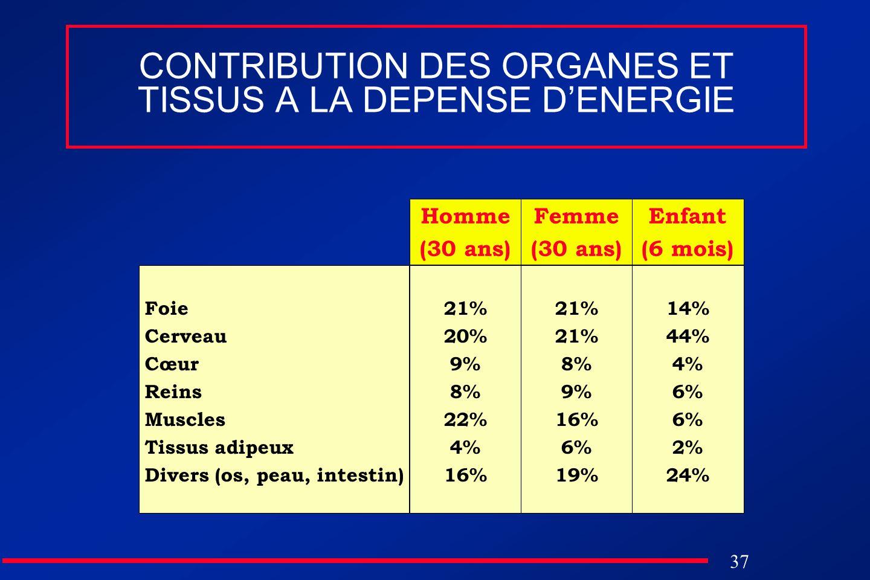 CONTRIBUTION DES ORGANES ET TISSUS A LA DEPENSE D'ENERGIE