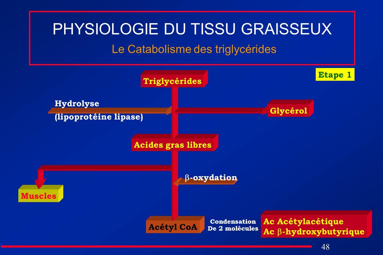 PHYSIOLOGIE DU TISSU GRAISSEUX Le Catabolisme des triglycérides