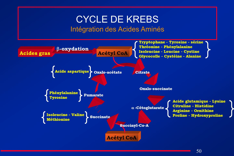 CYCLE DE KREBS Intégration des Acides Aminés