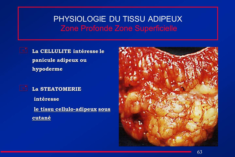 PHYSIOLOGIE DU TISSU ADIPEUX Zone Profonde Zone Superficielle