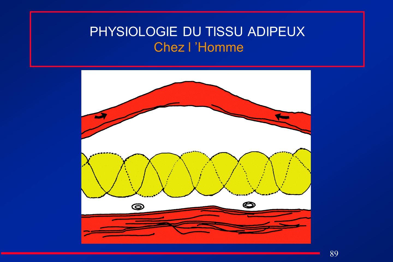 PHYSIOLOGIE DU TISSU ADIPEUX Chez l 'Homme