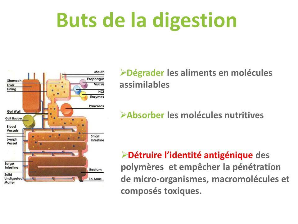 Buts de la digestion Dégrader les aliments en molécules assimilables