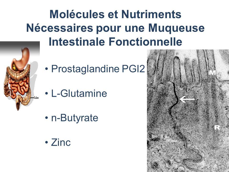 Molécules et Nutriments Nécessaires pour une Muqueuse Intestinale Fonctionnelle