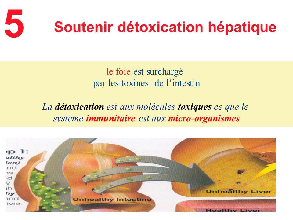 5 Soutenir détoxication hépatique le foie est surchargé
