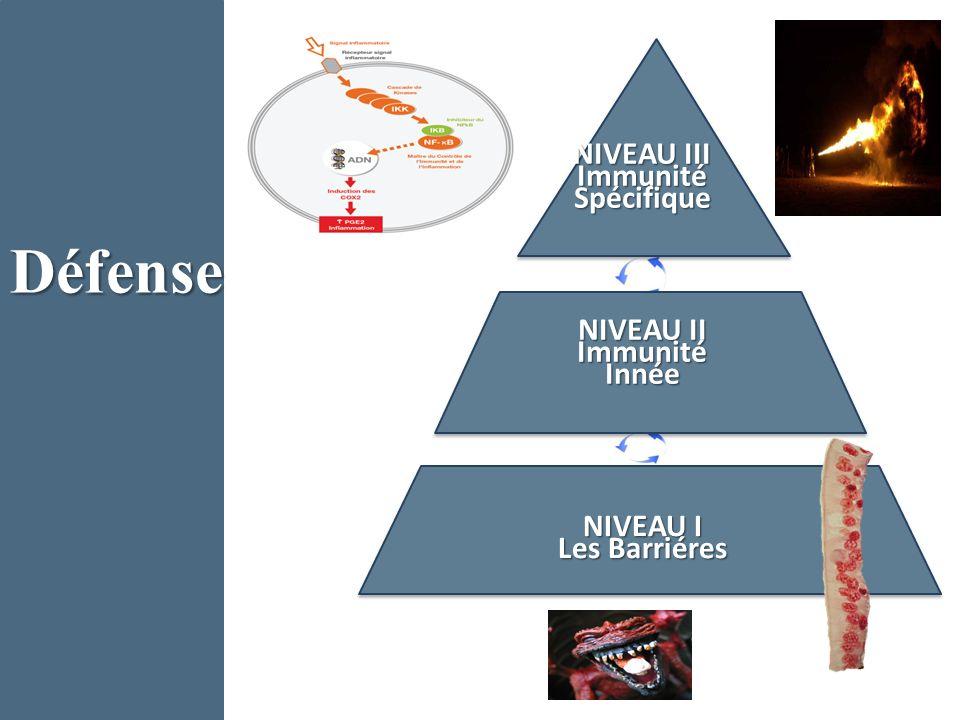 Défense NIVEAU III Immunité Spécifique NIVEAU II Immunité Innée