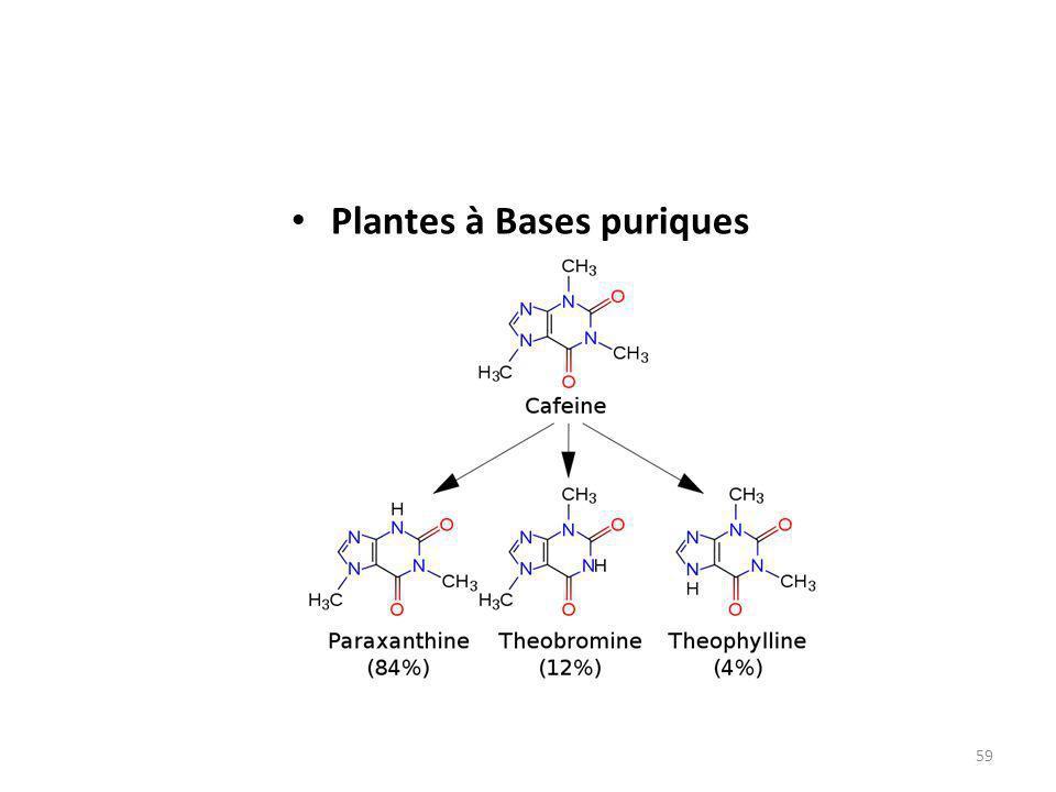 Plantes à Bases puriques
