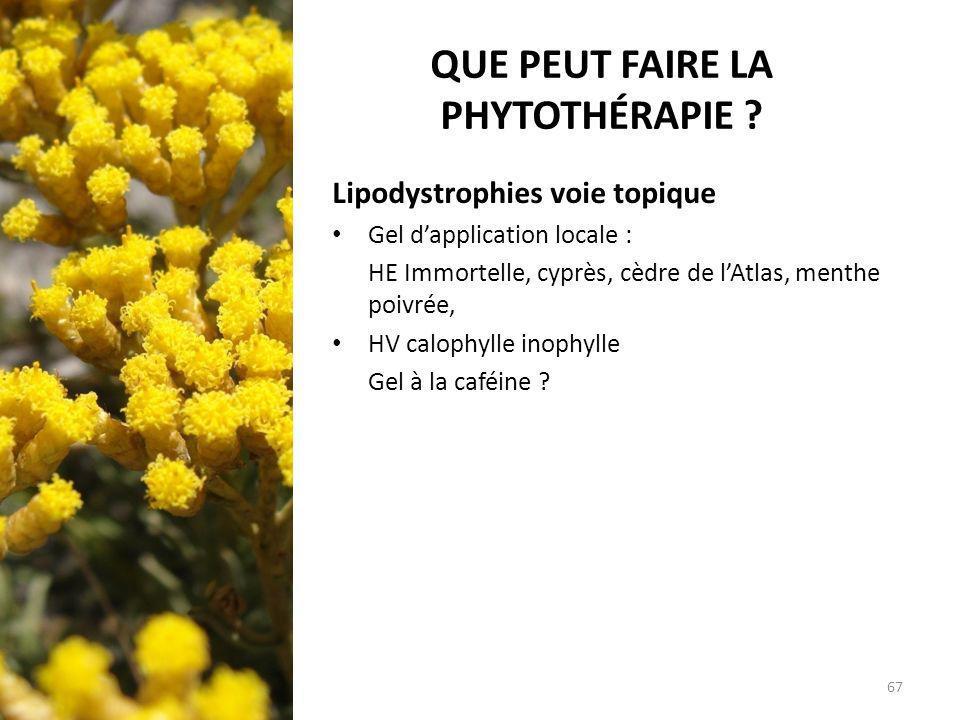 QUE PEUT FAIRE LA PHYTOTHÉRAPIE