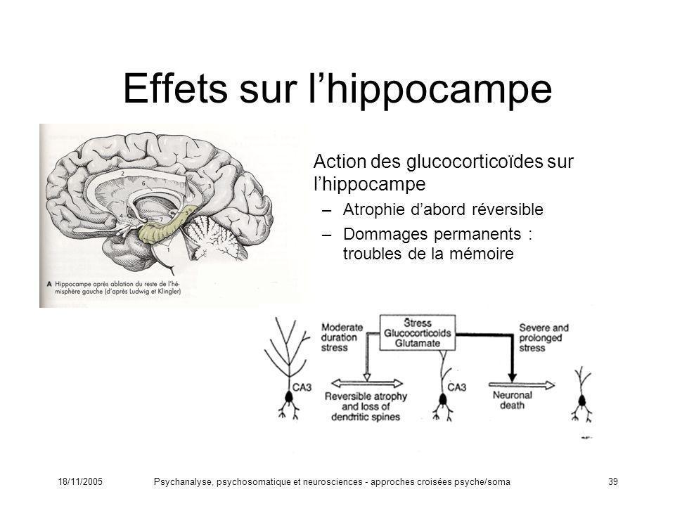 Effets sur l'hippocampe