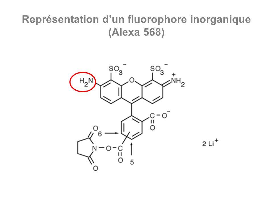 Représentation d'un fluorophore inorganique (Alexa 568)
