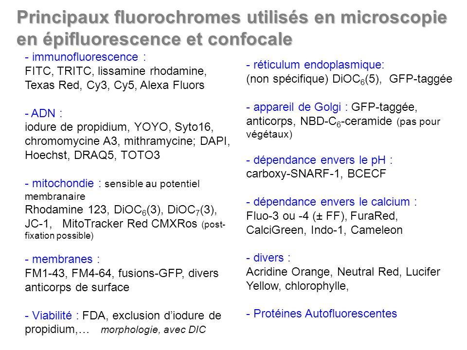 Principaux fluorochromes utilisés en microscopie en épifluorescence et confocale