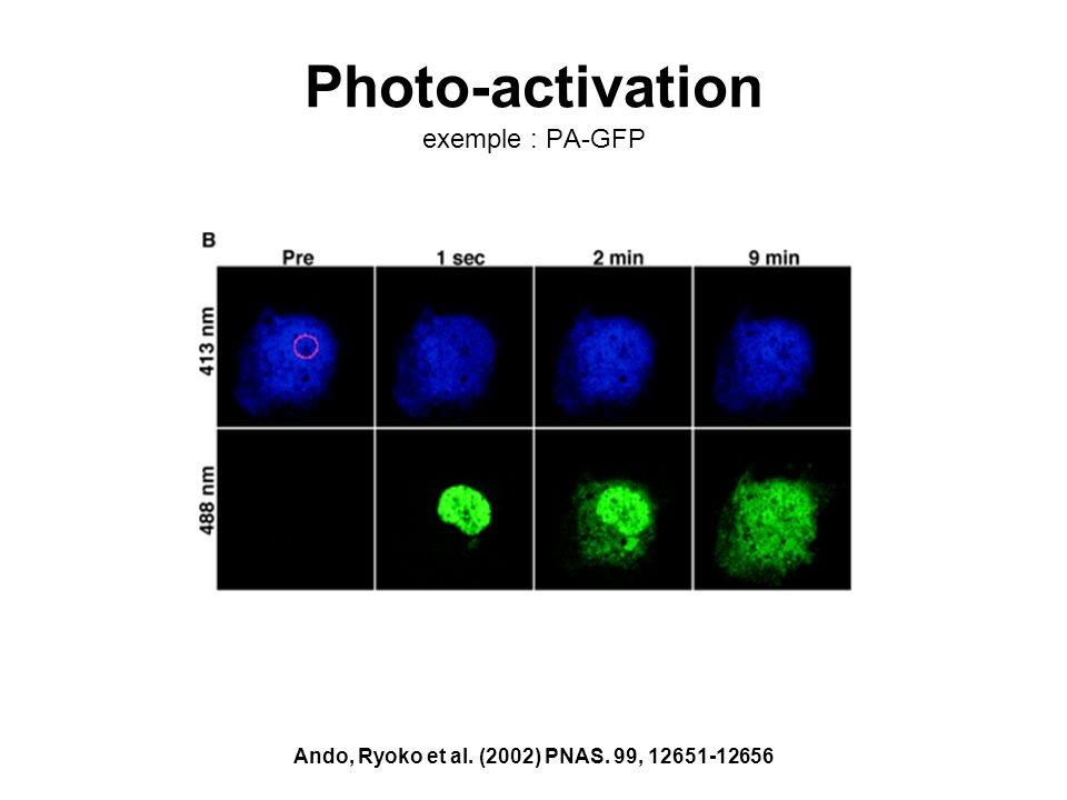 Photo-activation exemple : PA-GFP