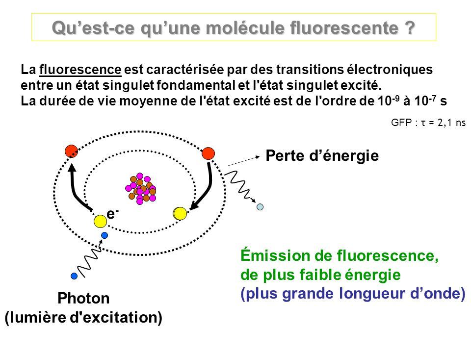 Qu'est-ce qu'une molécule fluorescente (lumière d excitation)