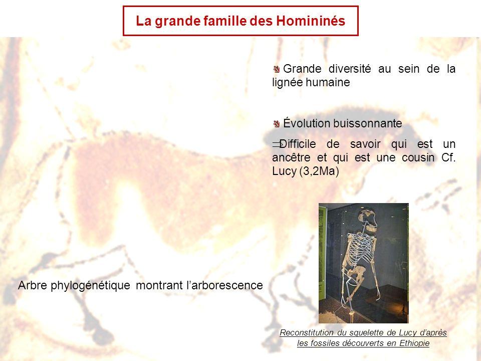 La grande famille des Homininés