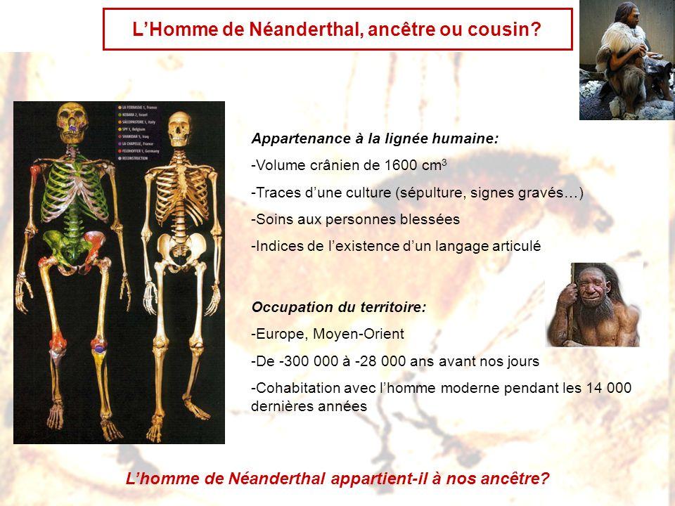 L'Homme de Néanderthal, ancêtre ou cousin