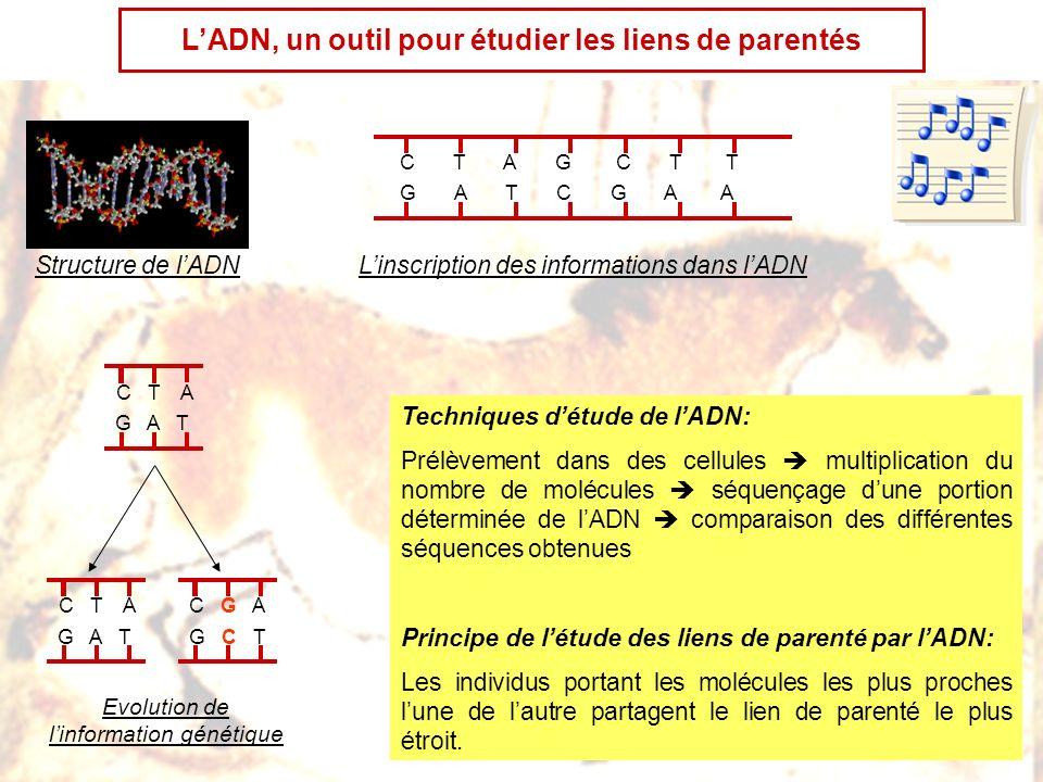 L'ADN, un outil pour étudier les liens de parentés