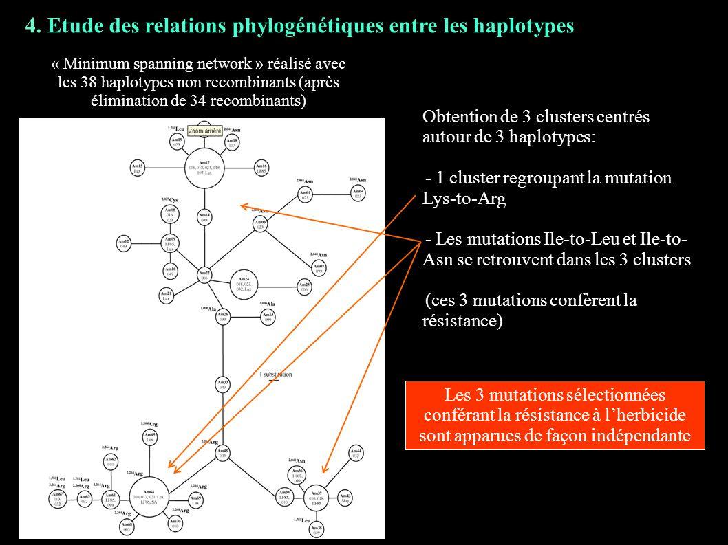 4. Etude des relations phylogénétiques entre les haplotypes