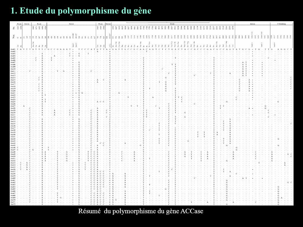 Résumé du polymorphisme du gène ACCase