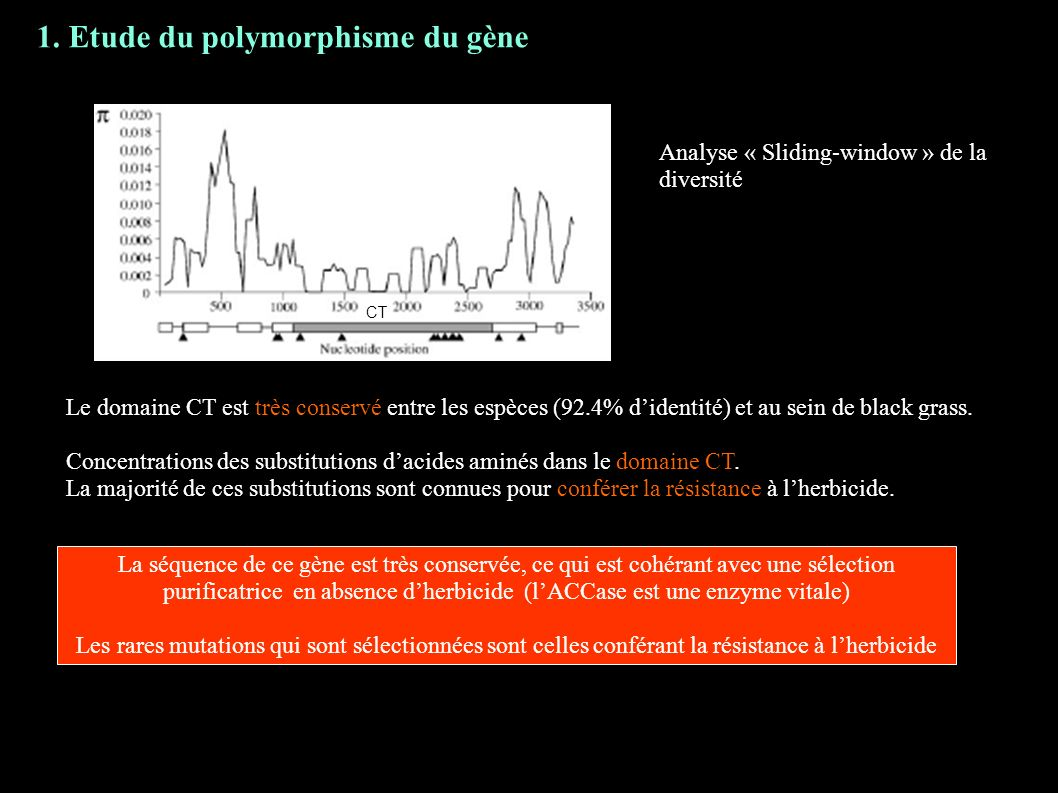 1. Etude du polymorphisme du gène