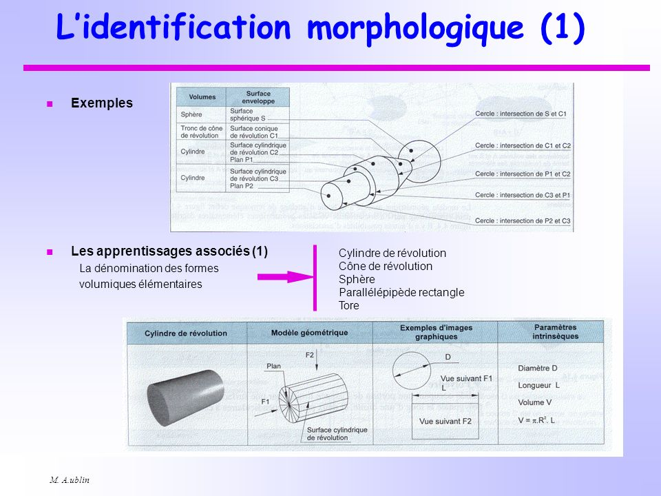 L'identification morphologique (1)