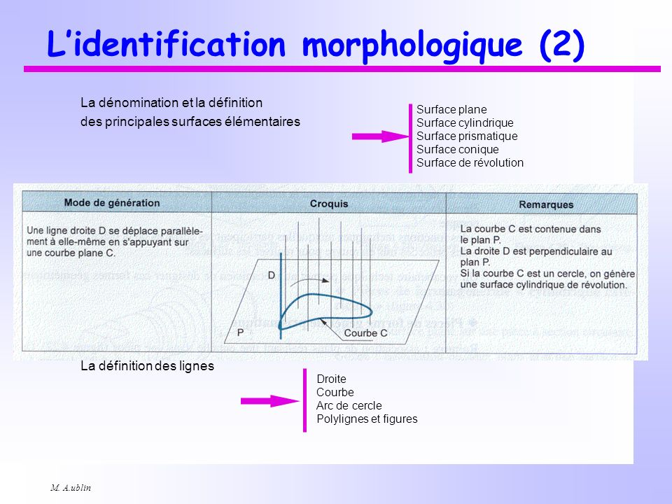 L'identification morphologique (2)