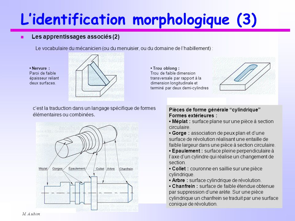 L'identification morphologique (3)