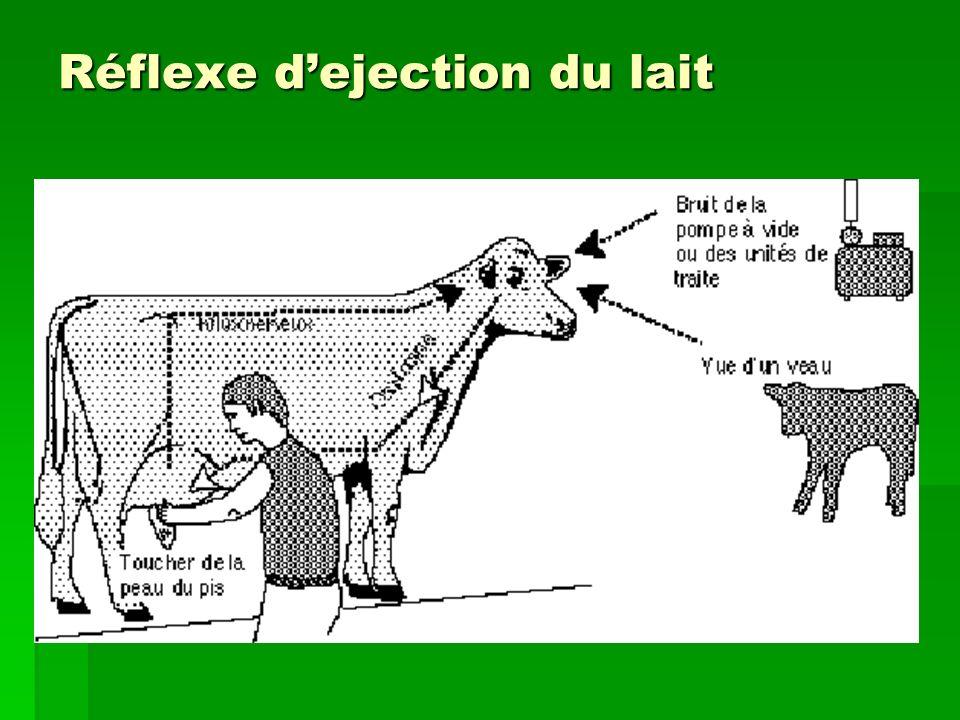 Réflexe d'ejection du lait