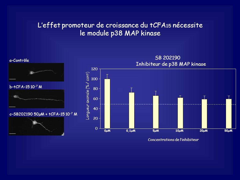 L'effet promoteur de croissance du tCFA15 nécessite