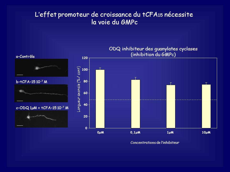 L'effet promoteur de croissance du tCFA15 nécessite la voie du GMPc