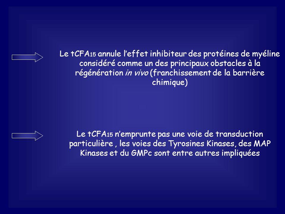 Le tCFA15 annule l'effet inhibiteur des protéines de myéline considéré comme un des principaux obstacles à la régénération in vivo (franchissement de la barrière chimique)