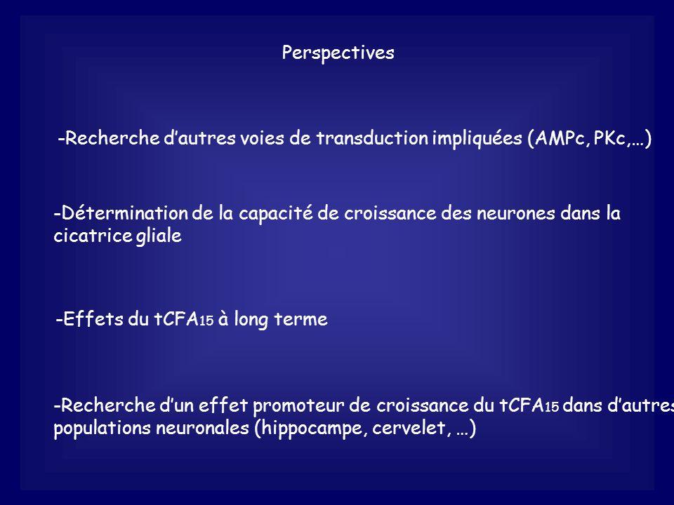 Recherche d'autres voies de transduction impliquées (AMPc, PKc,…)