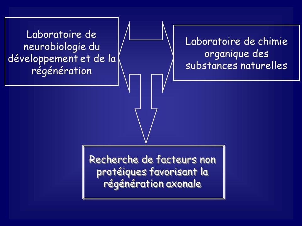 Laboratoire de neurobiologie du développement et de la régénération