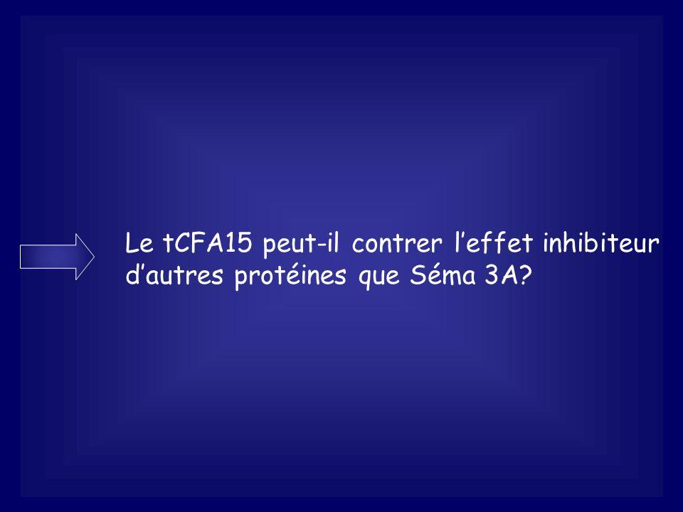 Le tCFA15 peut-il contrer l'effet inhibiteur d'autres protéines que Séma 3A