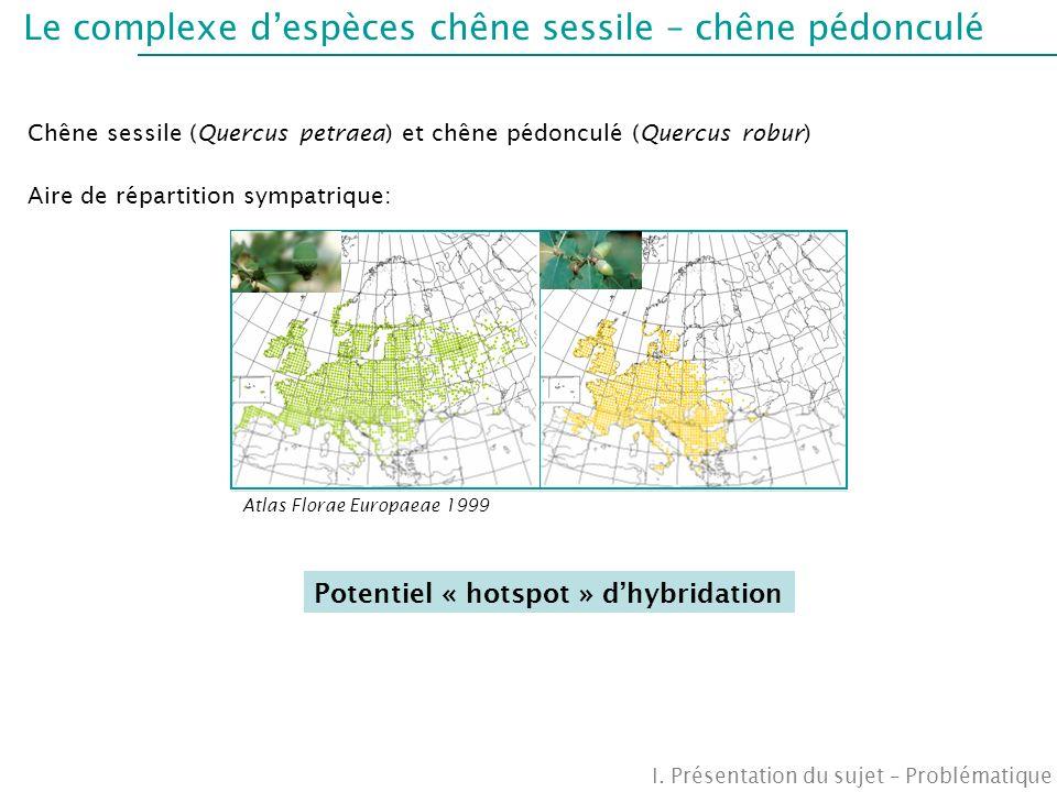 Le complexe d'espèces chêne sessile – chêne pédonculé