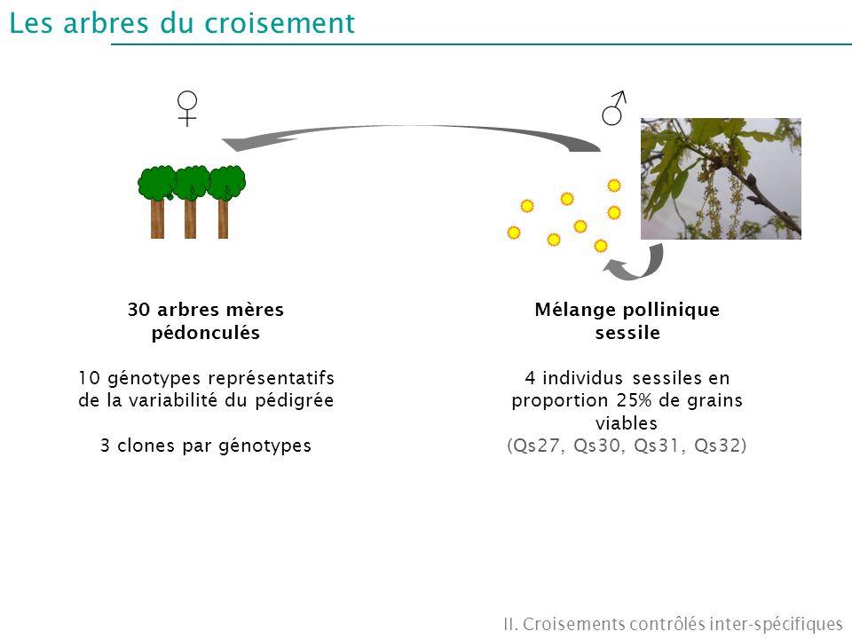 30 arbres mères pédonculés Mélange pollinique sessile