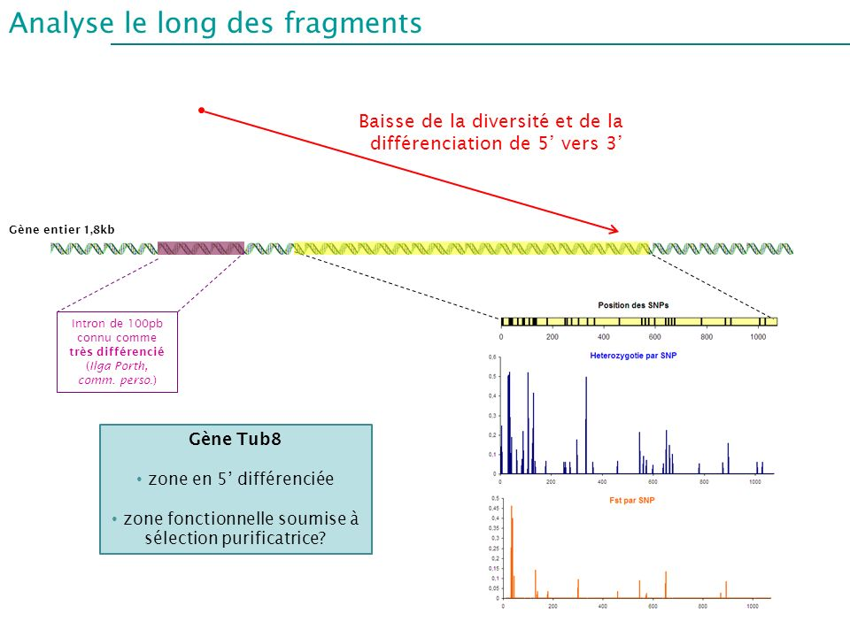 Analyse le long des fragments