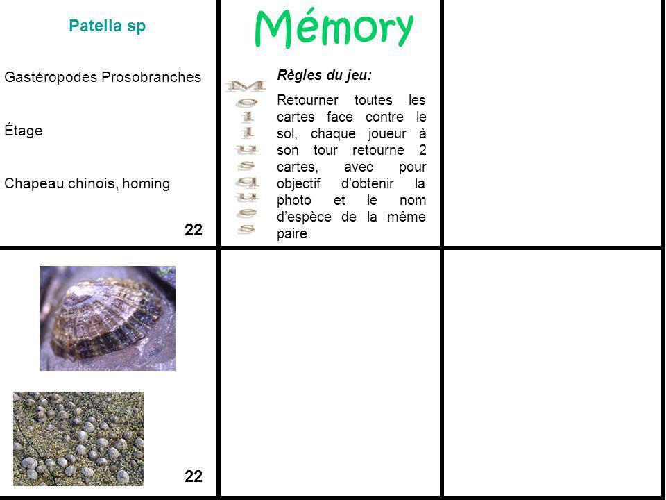 Mémory Mollusques Patella sp 22 22 Gastéropodes Prosobranches Étage