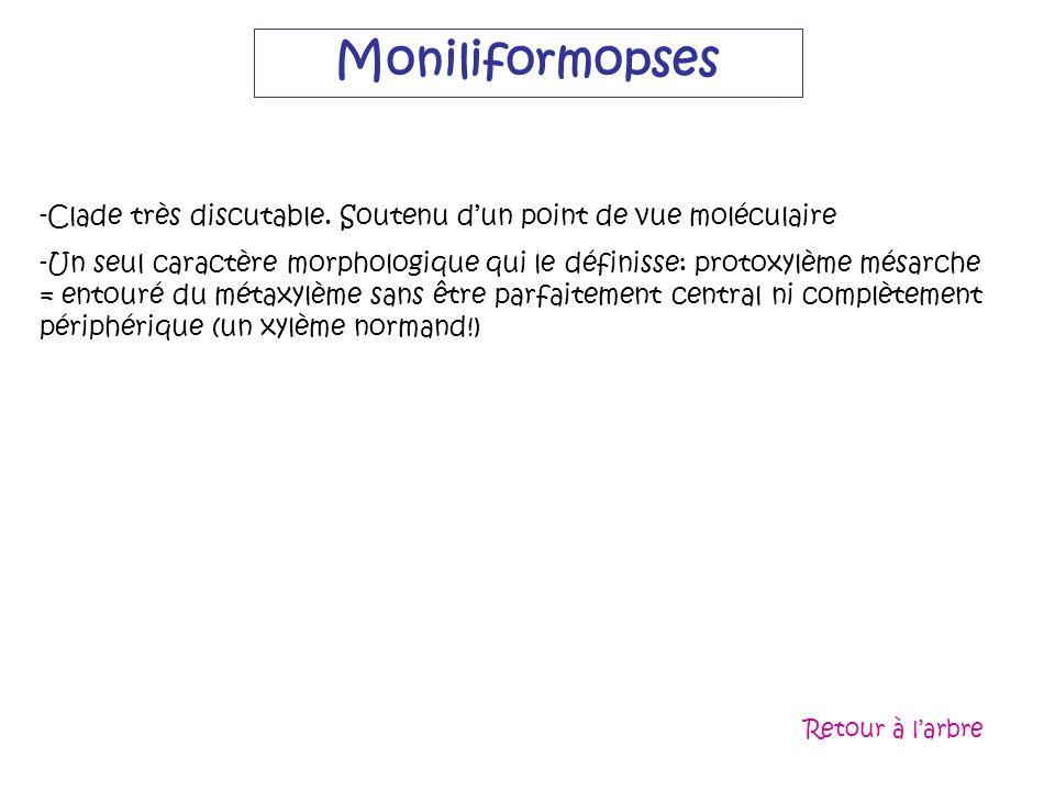 MoniliformopsesClade très discutable. Soutenu d'un point de vue moléculaire.