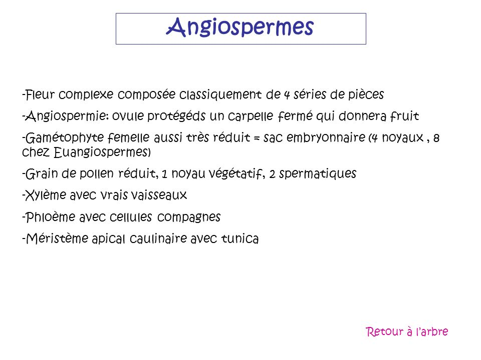 Angiospermes Fleur complexe composée classiquement de 4 séries de pièces. Angiospermie: ovule protégéds un carpelle fermé qui donnera fruit.